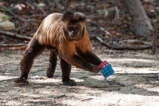 TV tonight Primates