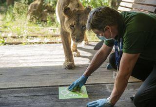 TV tonight London Zoo: An Extraordinary Year