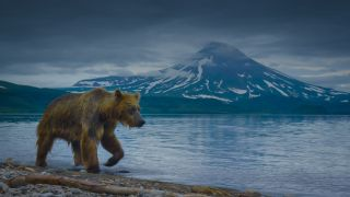 A brown bear patrols the shore of Kurile Lake in A Perfect Planet