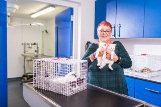 Kitten Rescue with Jo Brand