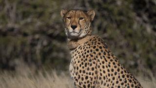 Cheetah Family & Me