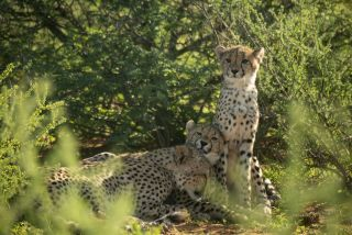 The Cheetah Family and Me TV Tonight
