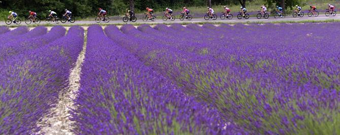 Matteo Trentin (Mitchelton-Scott) wins stage 17 at the Tour de France